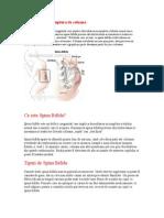 Spina Bifida Sau Ruptura de Coloana