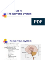Nervous System (Review)