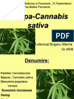 CINEPA Cannabis