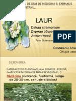 Laur   Datura .ppt