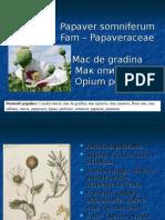 Mac Papaver