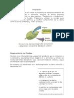 Respiración y Fotosintesis