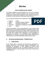 Documento Rubro Berries