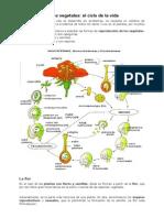 Guia N_1_Evolución Floral y Frutos