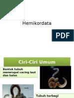 Hemikordata-1