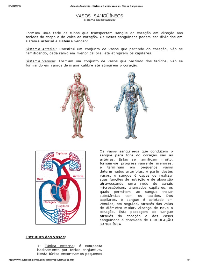 Aula de Anatomia - Sistema Cardiovascular - Vasos Sangüíneos