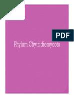 Phylum chytridiomycota