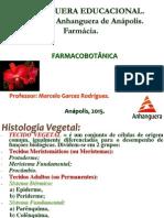 Aula 4 - Tecidos Vegetais