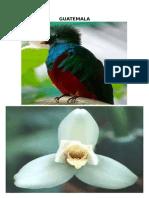 Fauna de Guatemala