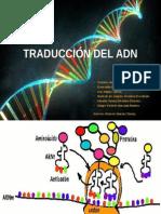 Traducción Del ADN