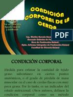 Condición Corporal de La Cerda