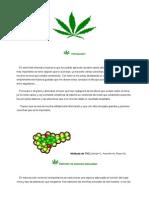 como cultivar marihuana.pdf