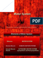 Motor System.ppt