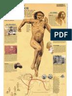 Homoantecessor.pdf