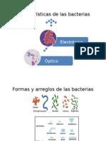 Caracteristicas de Las Bacterias