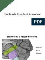 sectiuni trunchi cerebral