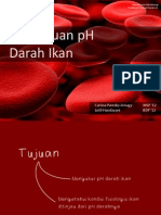 pH Darah