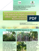 """Experiences with Fusarium oxysporum f. sp. cubense on a highly susceptible cultivar (""""Apple"""" banana type - AAB) Recommendations"""