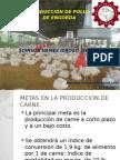 Pollos de Egorde