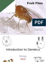 biology - fruit fly genetics i