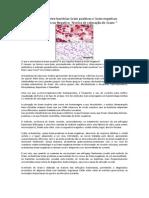 DiferenC3A7as Entre BactC3A9rias Gram Positivas e Gram Negativas