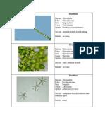 hafalan plankton