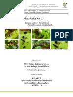 Toxoptera Citricida en Citricos