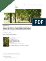 Arbustos Nativos - Vivero Universidad de Talca