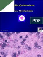 Mycobacterium Bovis