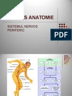 Sistemul Nervos Periferic