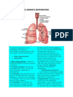 El Aparato Respiratorio