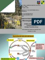6.Microorganismos-Planta.pdf