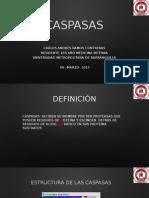 PRESENTACION CASPASAS.
