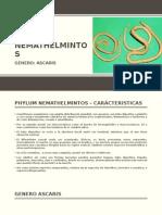 Phylum Nemathelmintos-ascaris lumbricoides-ciclo biologicos de ascaris