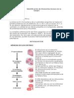 Identificacion de elementos formes de la sangre