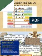 taxonomia 1