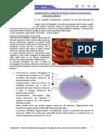 Biologia 09 - RER, Golgi, Lisosomi e Inclusioni-2