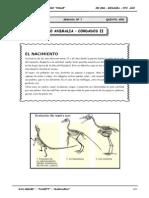 III Bim - 5to. año - Bio - Guía 7 - Reino Animalia - cordado.doc