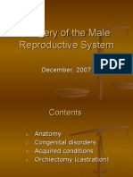 Chapter 12. Male Reproductive System-2