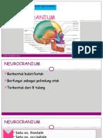 L3-NEUROCRANIUM.pptx