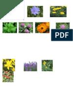 Plante medicinale.docx