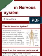 nervous system yanwei