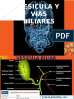 VEsICULA Y VIAS BILIARES.pptx