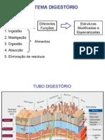 Aula do  Sistema Digestório