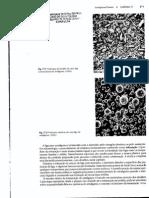 Pag 471, 477.pdf