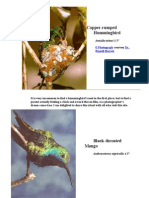 native bird of trinidad and tobago