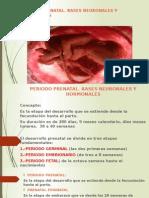 Periodo Prenatal 1