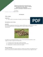 Informe 3. Madera