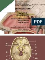 Nervus I (Olfaktorius)