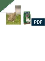 El Conejo Común o Conejo Europeo